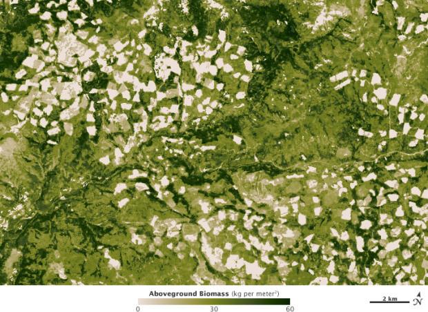 Biomass detail