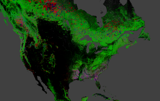 Global forest change