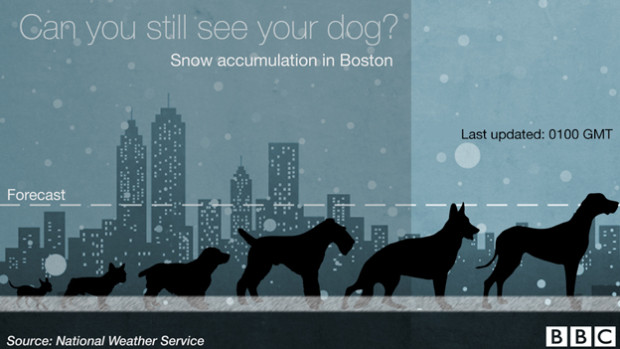 Snow dog accumulation