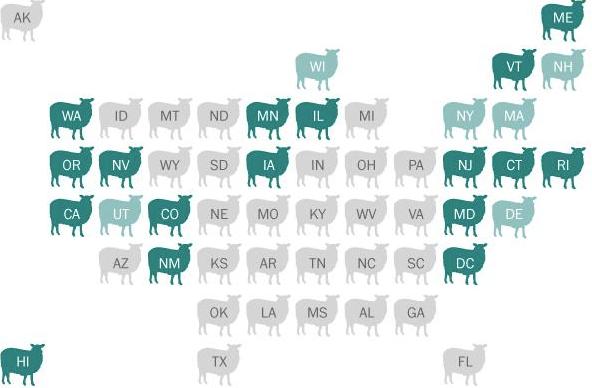 Sheep grid