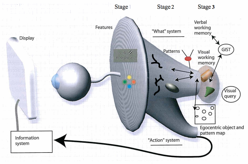 three-stage-model-of-human-visual-information-processing